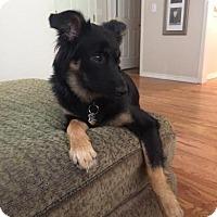 Adopt A Pet :: RUBY - Kingston, WA