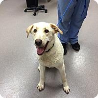 Adopt A Pet :: Butters - Cumming, GA
