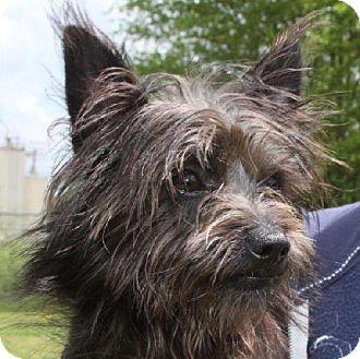 Terrier (Unknown Type, Medium) Mix Dog for adoption in Winder, Georgia - Baxter