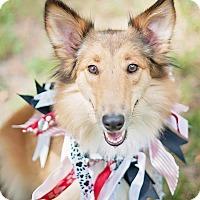 Adopt A Pet :: Lady - Houston, TX