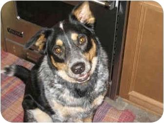 Australian Cattle Dog Mix Dog for adoption in Lamar, Nebraska - Tripod