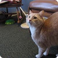 Adopt A Pet :: Milo - Northfield, MN