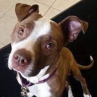 Adopt A Pet :: Kamalli - Dundee, MI