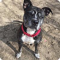 Adopt A Pet :: Bonnie - Mt Vernon, NY