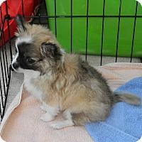 Adopt A Pet :: Darby - Umatilla, FL