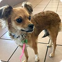 Adopt A Pet :: Lilith - Las Vegas, NV