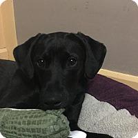 Adopt A Pet :: Hendrix - Grafton, WI