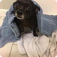 Adopt A Pet :: Baby ~ meet me! - Glastonbury, CT