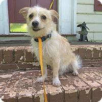 Adopt A Pet :: Toby - Lawrenceville, GA