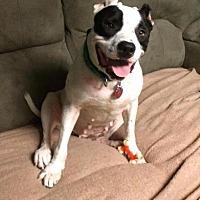 Adopt A Pet :: Ehlena - McCalla, AL