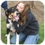 Photo 1 - Australian Shepherd/Border Collie Mix Dog for adoption in Canton, Ohio - Zena (cage 26)