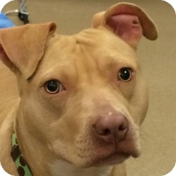 Terrier (Unknown Type, Medium) Mix Dog for adoption in Eatontown, New Jersey - Blondie