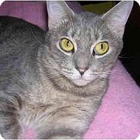Adopt A Pet :: Amy - Richmond, VA