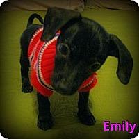 Adopt A Pet :: Emily - Silsbee, TX