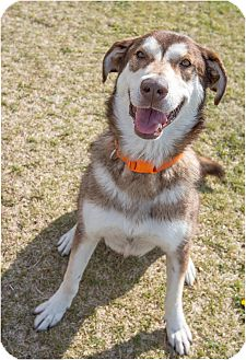 Husky Mix Dog for adoption in Fruit Heights, Utah - Nala