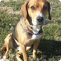 Adopt A Pet :: Rusty- SWEETEST DOG EVER - Hagerstown, MD