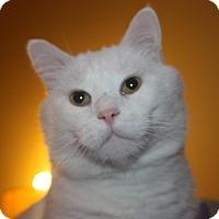 Adopt A Pet :: Asher (LE) - Little Falls, NJ
