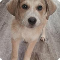 Adopt A Pet :: Smore - Adopted! - Croydon, NH