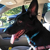 Adopt A Pet :: Rory - in Maine - kennebunkport, ME