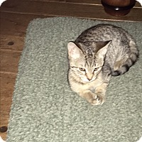 Adopt A Pet :: Gracie - Jackson, NJ