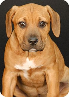 Hound (Unknown Type) Mix Puppy for adoption in Newland, North Carolina - Rush