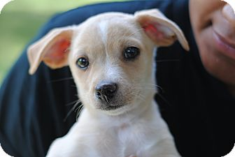 Mixed Breed (Small) Mix Puppy for adoption in Fort Atkinson, Wisconsin - Tooky