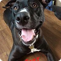 Adopt A Pet :: Czar - Lincoln, CA
