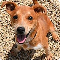 Adopt A Pet :: Coco - Lacon, IL