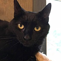 Adopt A Pet :: Jelly Bean - Rochester, NY