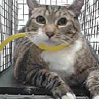 Adopt A Pet :: 18-02353 - Downey, CA