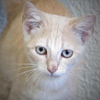 Adopt A Pet :: Rikki - Gonzales, TX