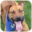 Photo 1 - Shepherd (Unknown Type)/Boxer Mix Puppy for adoption in San Diego, California - Dugan