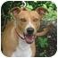 Photo 1 - Terrier (Unknown Type, Medium)/Labrador Retriever Mix Dog for adoption in Kingwood, Texas - Sadie