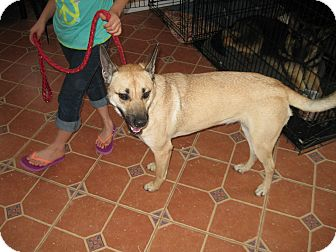 German Shepherd Dog Mix Dog for adoption in Greeneville, Tennessee - Chloe