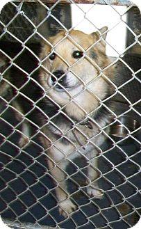 German Shepherd Dog Mix Dog for adoption in Greeneville, Tennessee - Sponsored**