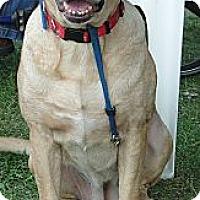Adopt A Pet :: Alana - Columbus, IN