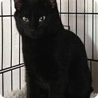 Adopt A Pet :: Pax - Port Republic, MD