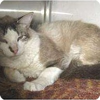 Adopt A Pet :: Apache - Schertz, TX
