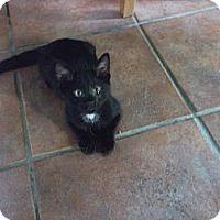 Adopt A Pet :: Trick - Chicago, IL
