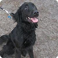 Adopt A Pet :: Vadar - Jacksonville, FL