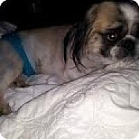 Adopt A Pet :: Cody - Richmond, VA