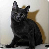 Adopt A Pet :: Mercury - Farmingdale, NY