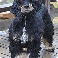 Adopt A Pet :: Melody - Sugarland, TX