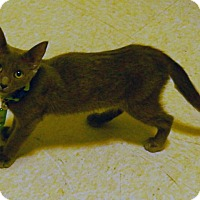 Adopt A Pet :: Arlana - The Colony, TX