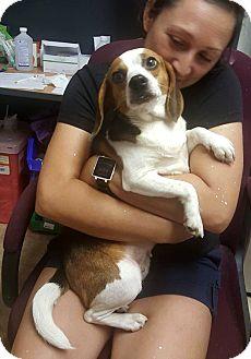 Beagle Mix Dog for adoption in Savannah, Georgia - Lacey