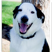 Adopt A Pet :: Po super family dog - Sacramento, CA