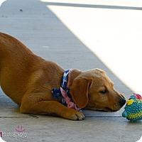 Adopt A Pet :: Rogan - Muldrow, OK