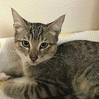 Adopt A Pet :: Tucker - San Leon, TX