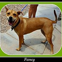 Adopt A Pet :: Fancy - Tombstone, AZ