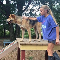 Adopt A Pet :: Jacob 17 - Brookhaven, MS